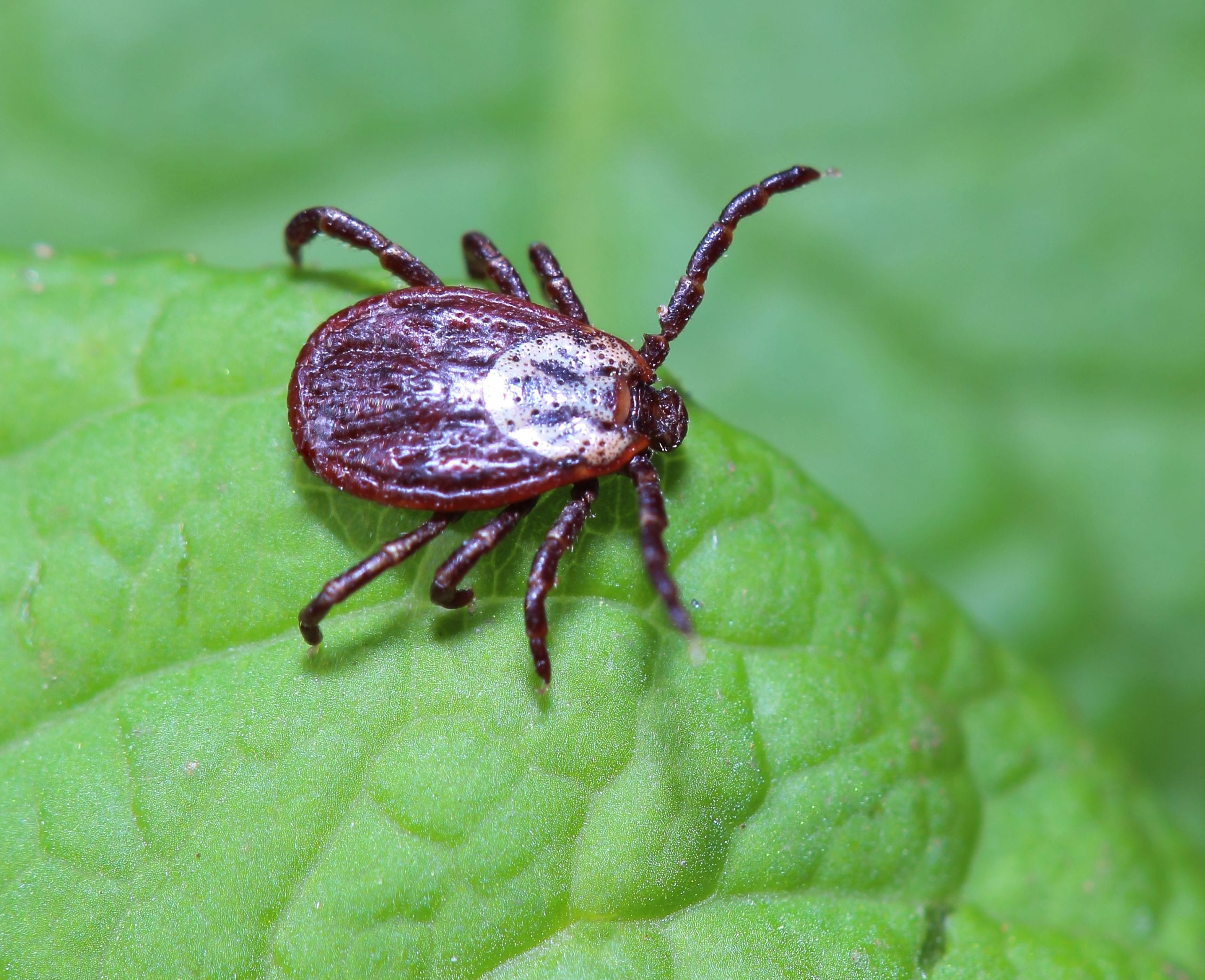 tick prevention in Green Valley, AZ